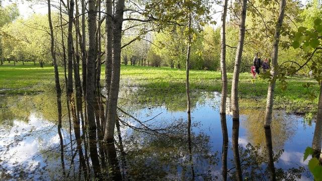 Eignet sich für ausgedehnte Spaziergänge: Park «Imeni 50-letnaya Oktyabrya»