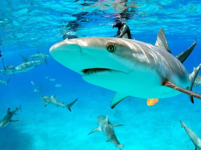 Ein Hai in Nahaufnahme