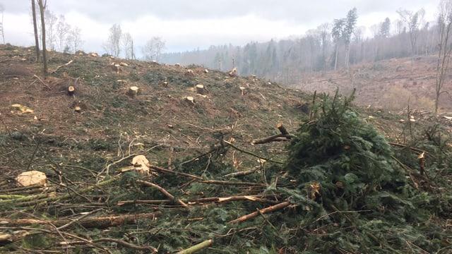 Geknickte Bäume in Kestenholz