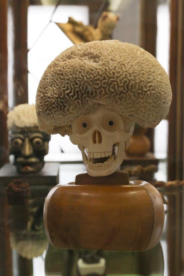 Ein Objekt, bestehend aus einem Totenschädels mit Pupillen, auf seinem Kopf eine Muschel, die wie eine Perücke aussieht.