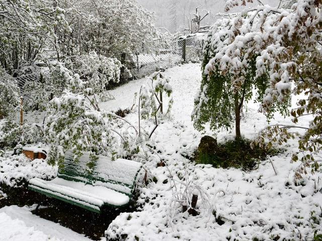 Im Garten des Fotografen liegen rund 5 Zentimeter Neuschnee.