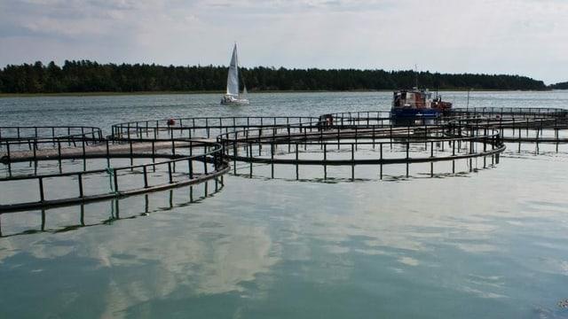 Aquakulturen im offenen Gewässer