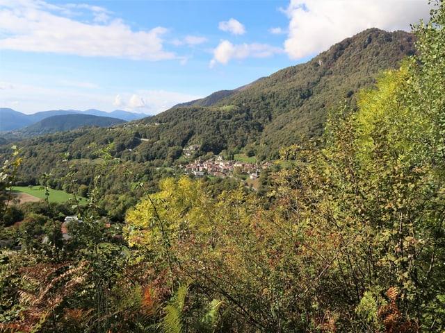 Buchen und Kastanienwald im Malcantone.
