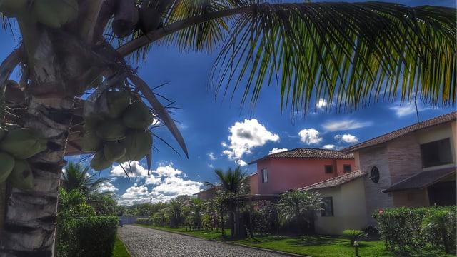 Palmen prägen das Bild in Porto Seguro.