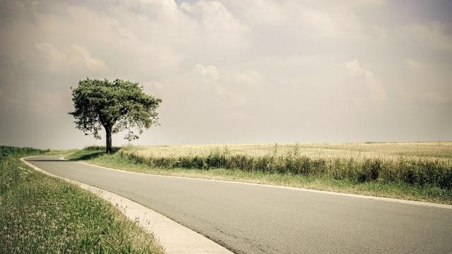 Eine einsame Strasse durch ein Feld, am Wegrand ein Baum.