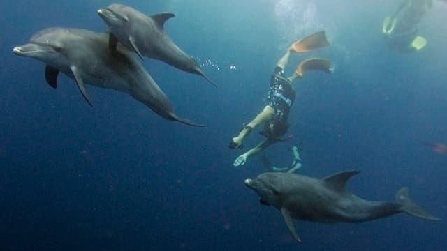 Menschen schwimmen mit drei Delfinen unter Wasser