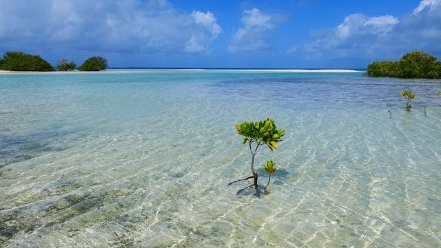 Pflanze ragt aus dem Meer, im Hintergrund eine Insel.