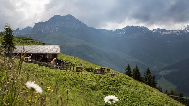 Alphütte mit Weide