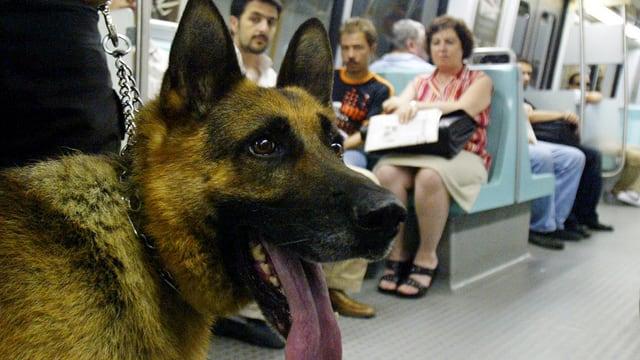 Kopf eines Hundes, im HiGru Passagiere in einem Tram