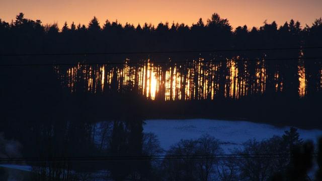 Die untergehende Sonne scheint durch einen kahlen Laubwald.