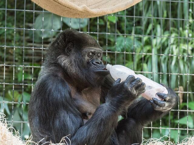 Goma mit Petflasche