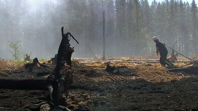 Feuerwehrmann zieht Schlauch in einem Wald mit rauch und abgebrannten Baumstrunk.