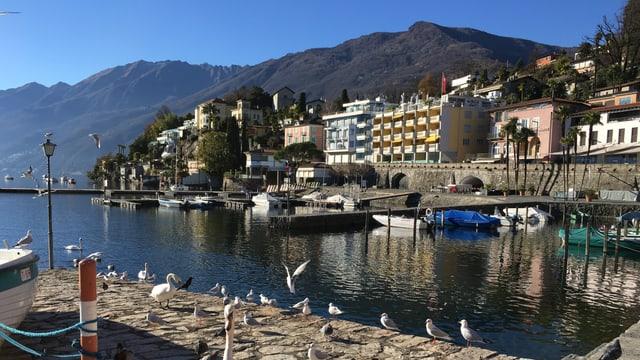 Die Uferpromenade von Ascona vor einem wolkenlosen Himmel.