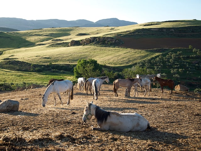 Ein paar Pferde sind im Hintergrund zu sehen. Sie grasen in der Sonne.