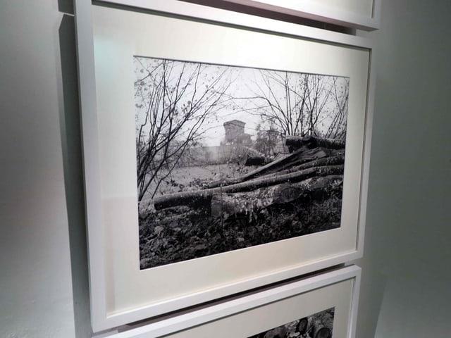 Foto mit Sträuchern und Baumstämmen am Boden
