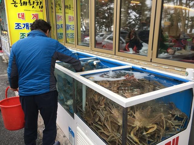 Krabben frisch aus dem Aquarium.