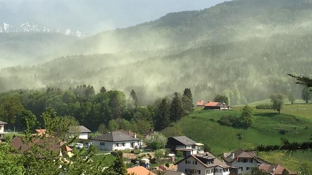 Gelbe Blütenstaubwolke im Kanton Freiburg