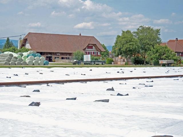 Feld mit Plastikfolie