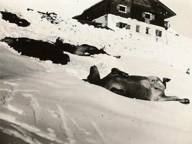 Muvel crappà en las lavinas dals 19 e 20 da schaner a St. Antönien.