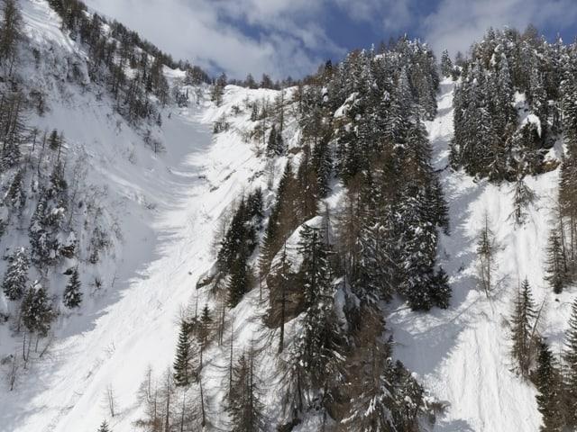 Schneebedeckte Hänge mit Bäumen