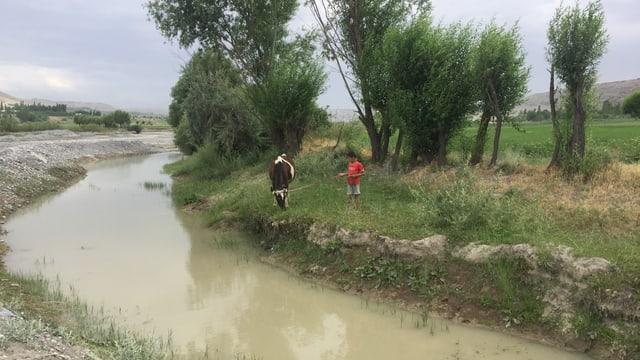 Ein Junge lässt eine Kuh an einem Fluss weiden.