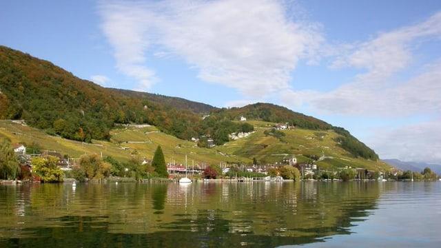 Blick auf Rebberge mit See im Vordergrund.