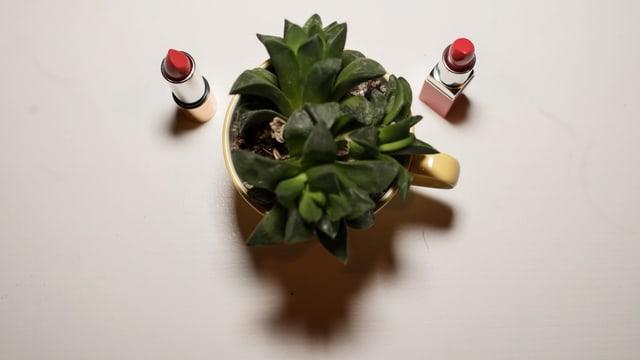 Ein Kaktus und zwei Lippenstifte sind wie eine Gebärmutter angeordnet.