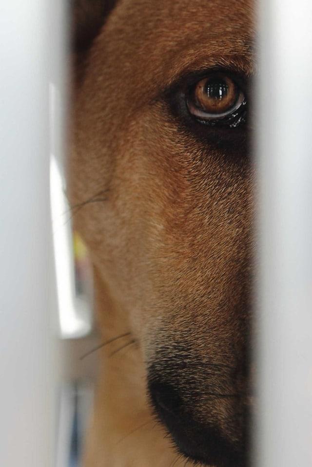 Hund sieht durch Gitterstäbe hindurch