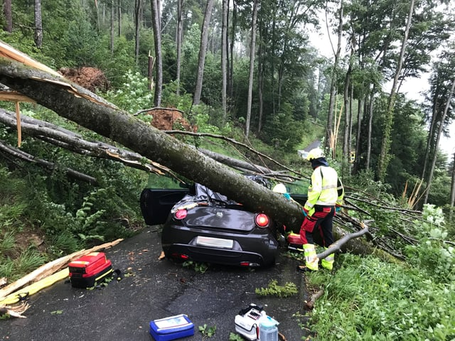 Baum ist auf Auto umgekippt.