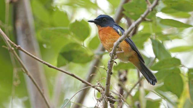 Vögel: Wir kennen sie alle – oder doch nicht?