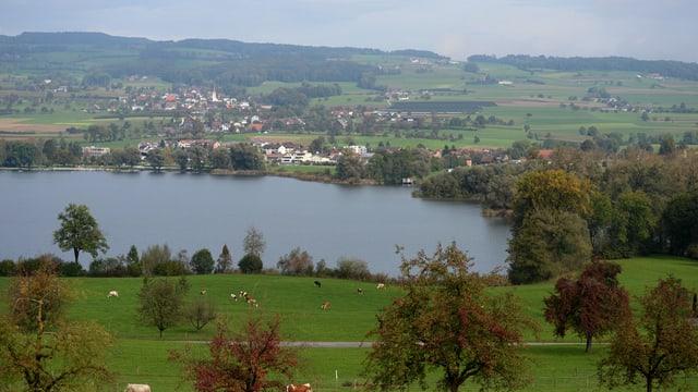 Ein kleiner See mit Kuhweiden im Vordergrund und einem Dorf im Hintergrund.
