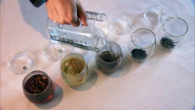 5 Tees werden mit heissem Wasser aufgegossen.