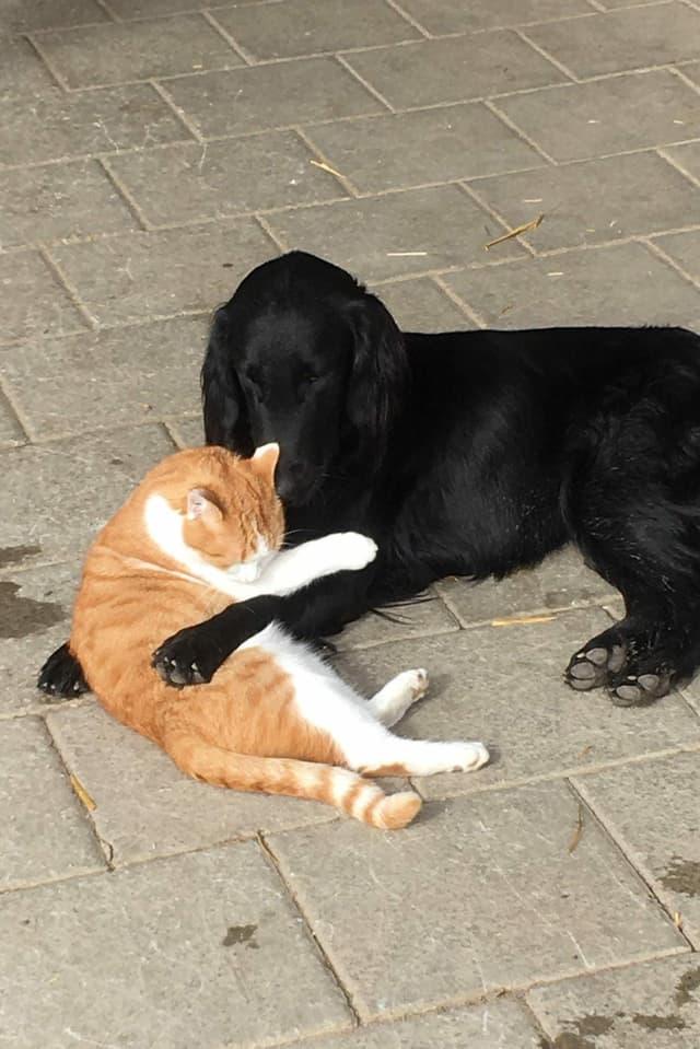 Ein Hund und eine Katze liegen kuschelnd auf dem Boden.