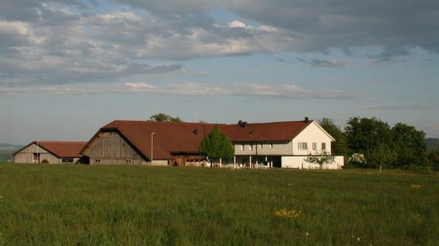 Ein grüne Wiese und im Hintergrund ein Haus