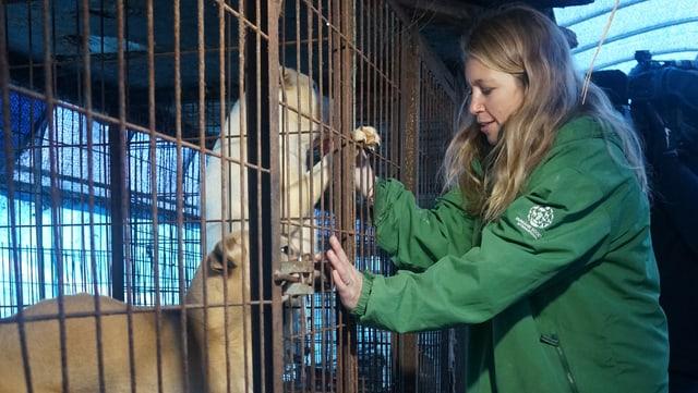 Eine Tierschützerin der «Humane Society International» befreit südkoreanische Schlachthunde.