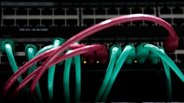 Netzwerkkabel, die in einen Server führen.