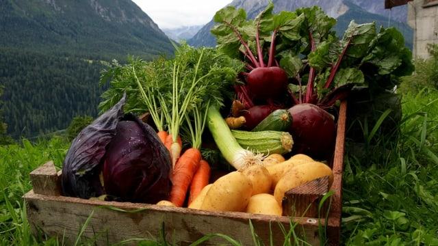 ina carton cun verduras.