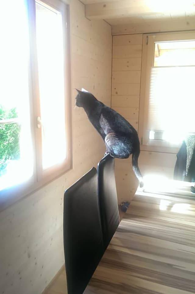 Katze, die auf einer engen Stuhllehne sitzt.