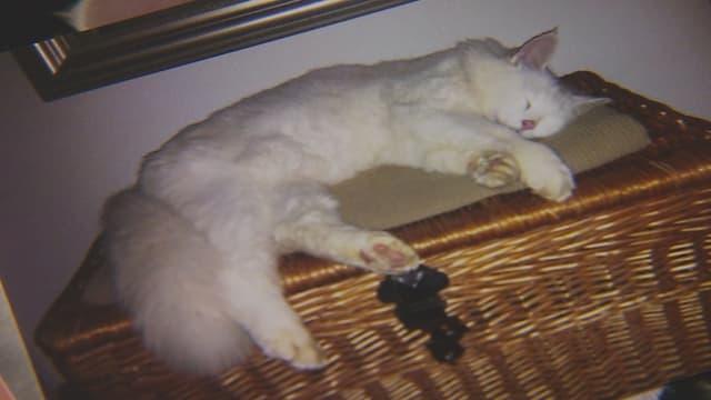 Weisse Langhaar-Katze schläft auf einer Truhe.