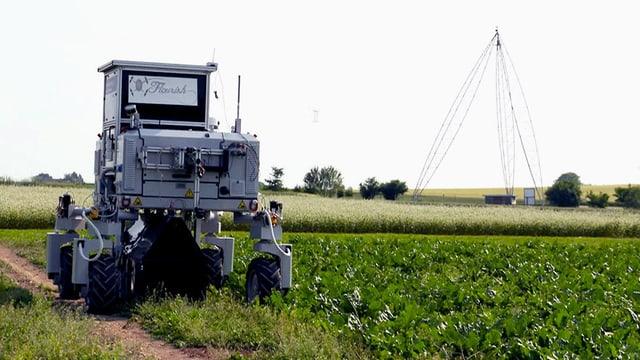 Roboter auf Gemüsefeld.