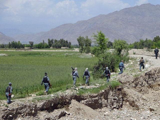 Suche nach einem Mohnfeld für den Opiumgewinn
