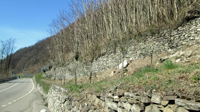 Mauern entlang einer Strasse auf dem Land: Auf der Mauer steht eine Reihe kahler, verästelter Bäume.