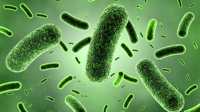 Grosse Welt der kleinen Mikroben