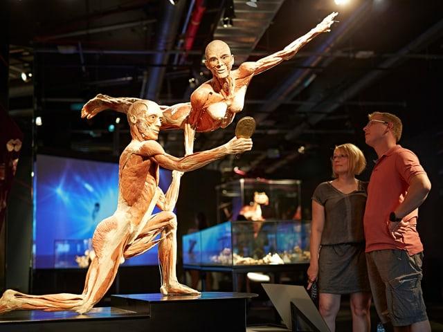 Zwei Besucher bestaunen plastinierte Leichen in künstlerischer Form.