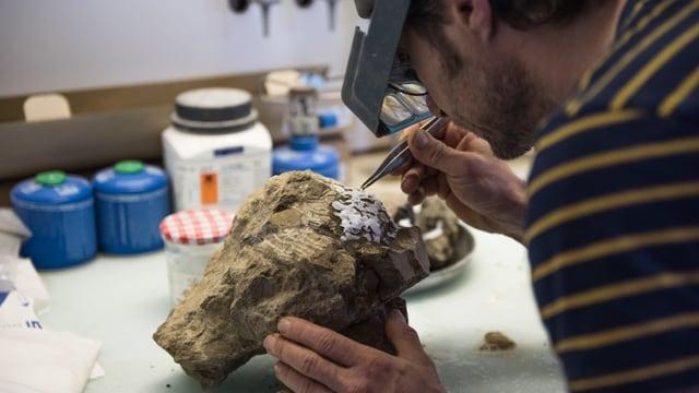 Bernasconi arbeitet an einem Fossil.