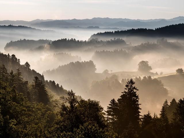 Hügelige Landschaft mit Morgennebel