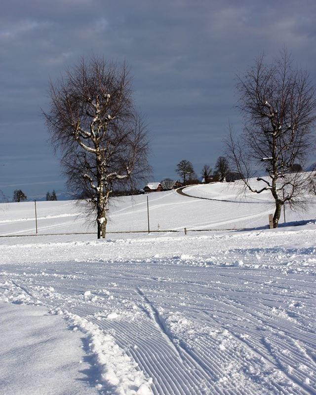 Eine Langlaufloipe, im Hintergrund zwei Bäume und die Aussicht ins Flachland.