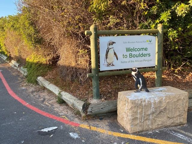 Pinguin vor einem Schild.