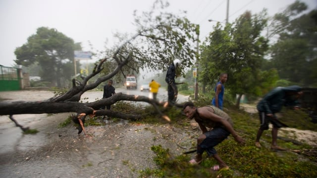 planta crudada pervi dal hurican Matthew a Haiti