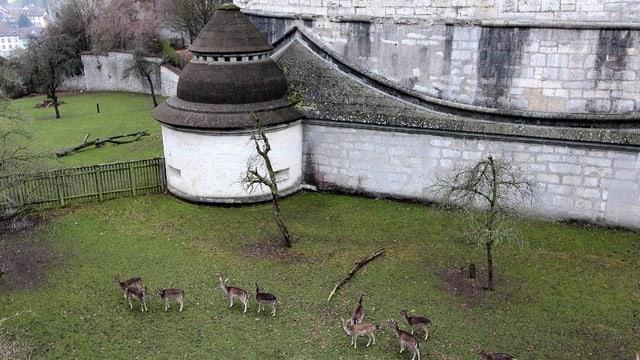 Eine historische Stadtmauer, darunter Hirsche